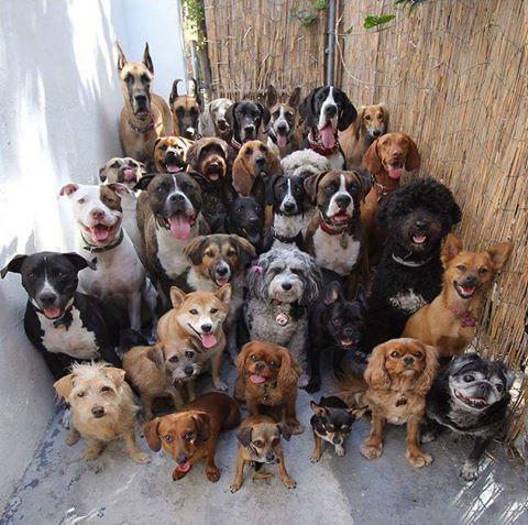 club canin pontois 17